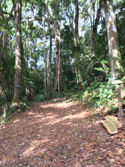 Mt Totumas Run and Drive to Boq (16)